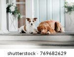 two dogs are lying on the porch.... | Shutterstock . vector #769682629