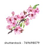 pink apple flowers  sakura ... | Shutterstock . vector #769698079