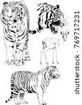vector drawings sketches... | Shutterstock .eps vector #769717231