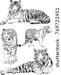 vector drawings sketches... | Shutterstock .eps vector #769722451