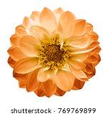 Autumn Yellow Orange   Flower...
