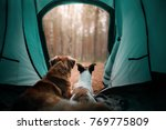 Two Dogs In A Tent In The...