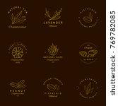 vector set of golden packaging... | Shutterstock .eps vector #769782085