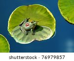 Fairytale Frog Prince