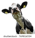Cow On A White Background