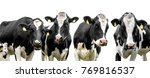 Cows Isolated On A White...