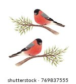 bullfinch sits on a spruce... | Shutterstock . vector #769837555