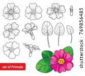vector set with outline primula ... | Shutterstock .eps vector #769856485