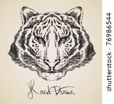 Tiger Drawing High Quality...