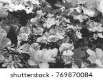 black and white background of... | Shutterstock . vector #769870084