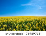 Field Of Yellow Rapeseed...