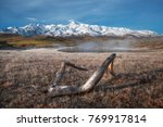snag on the ground covered with ... | Shutterstock . vector #769917814