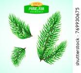 set of fir branches  christmas... | Shutterstock .eps vector #769930675