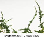 green creeper plant on a white... | Shutterstock . vector #770016529