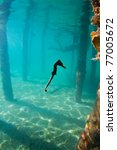 a seahorse hovering mid water | Shutterstock . vector #77005672