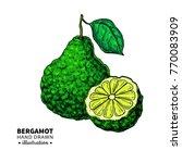 bergamot vector drawing.... | Shutterstock .eps vector #770083909