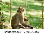 Monkey Monkey Embrace The Baby...
