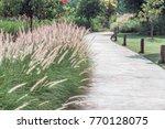 Concrete Walkway In Green Gras...