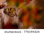 Tropical Butterfly In Leaves