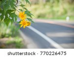 yellow flower near the road | Shutterstock . vector #770226475