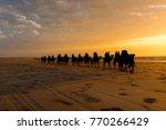 camels walking at sunset along... | Shutterstock . vector #770266429