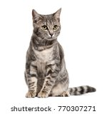 Stock photo grey stripped mixed breed cat sitting isolated on white 770307271