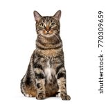 striped mixed breed cat sitting ...   Shutterstock . vector #770309659