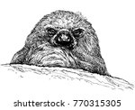 vector smiling sloth portrait.... | Shutterstock .eps vector #770315305