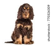 brown cocker spaniel dog sitting | Shutterstock . vector #770326309