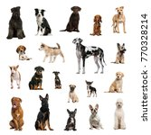 Large Collection Dogs Different Position - Fine Art prints
