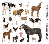Large Collection Farm Animal Different - Fine Art prints
