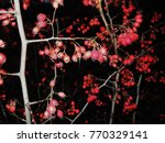 clusters of hawthorn | Shutterstock . vector #770329141