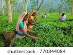assam north east india april ... | Shutterstock . vector #770344084
