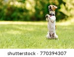 dog sitting on hind legs... | Shutterstock . vector #770394307