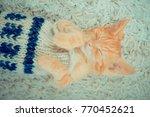 Stock photo little red kitten cat lies on the fluffy carpet at home little kitten sleeps close up of a 770452621