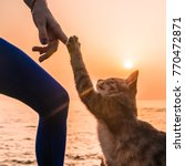 Stock photo young yoga woman in bodysuit having fun with a cat on the beach at amazing sunrise take five cute 770472871