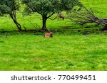 herd of mother elk with spotted ... | Shutterstock . vector #770499451
