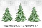 firs. set of beautiful... | Shutterstock .eps vector #770509147