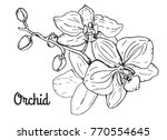 orchid flower branch. black and ... | Shutterstock .eps vector #770554645