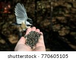 A Black Capped Chickadee...