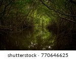 swamp in tortola   Shutterstock . vector #770646625