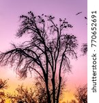 Silhouette Of Dry Tree And...