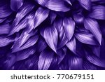 ultra violet background made of ... | Shutterstock . vector #770679151