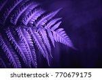 beautiful fern leaves green... | Shutterstock . vector #770679175