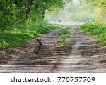 Small photo of Hare at the green forest
