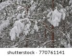 snow covered pine branches. | Shutterstock . vector #770761141