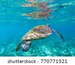 sea turtle in shallow sea water ... | Shutterstock . vector #770771521