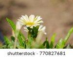 beautiful garden flowers close...   Shutterstock . vector #770827681
