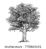 vector black and white and pen... | Shutterstock .eps vector #770863141
