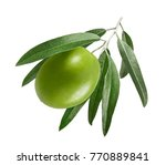 single green olive with leaves... | Shutterstock . vector #770889841